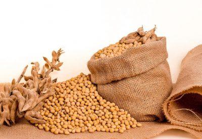 Frø/korn industri